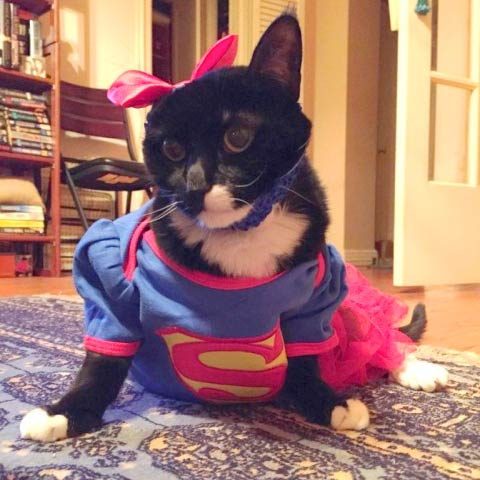 Feline Cancer Superhero Jill