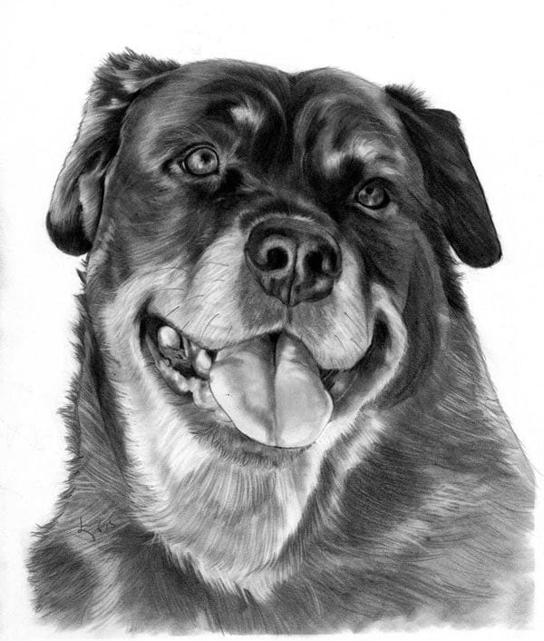 Custom Pet Pencil Drawing