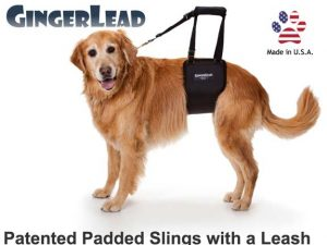 gingerlead-ginger