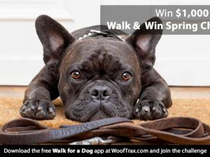 walk and win