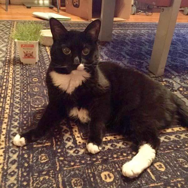 Tripawd Kitty Jill