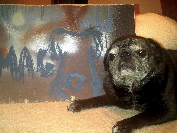 tri-pug maggie