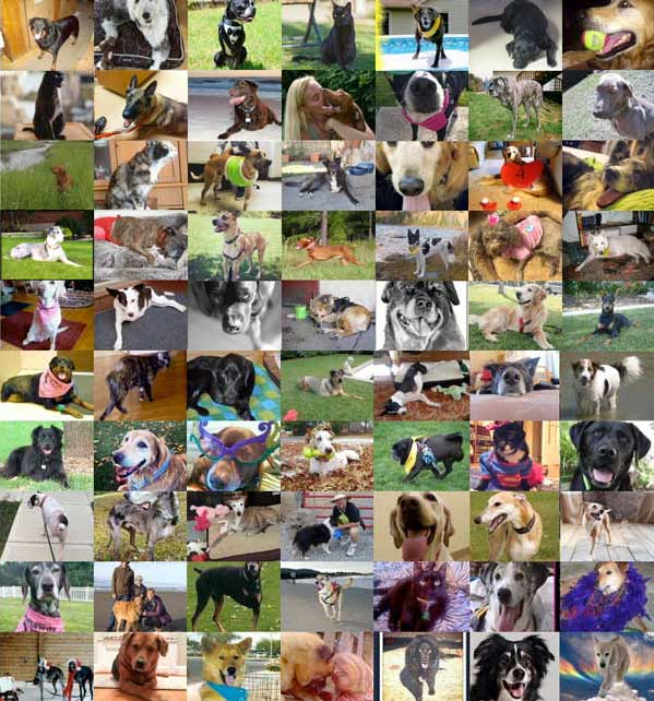 Tripawds Foundation donors as if Thanksgiving, 2015