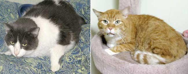 tripawd cat rescues