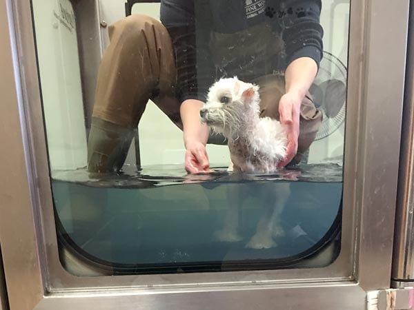 Water Treadmill Work for Cosmo