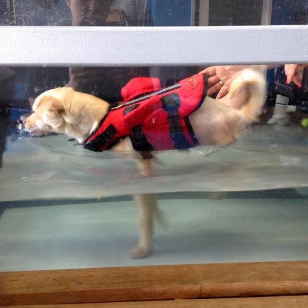 sunny boy canine rehab