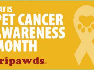 That Pet Place Pet Cancer Awareness Month