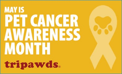 That Pet Place Pet Cancer Awareness Month