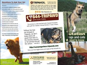 Tripawds Brochure for Sassy