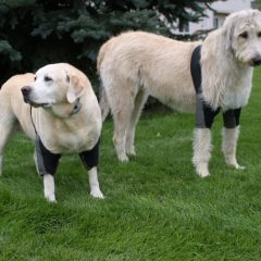 Dog Leggs Elbow Pads