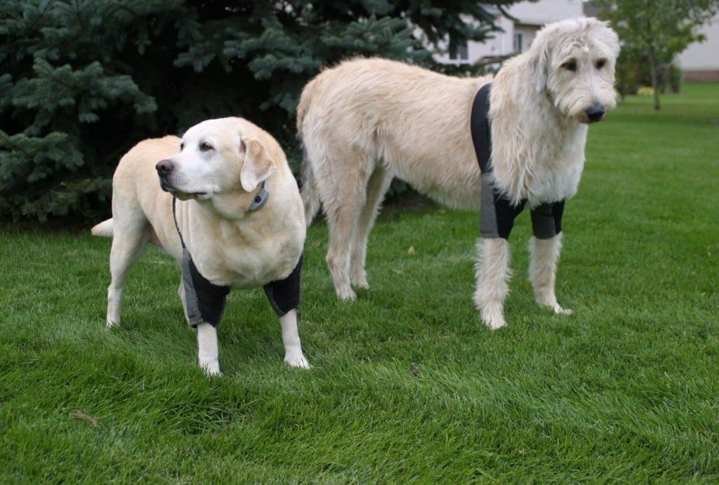 Dog Leggs Elbow Pads