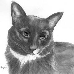 Jill Pencil Portrait