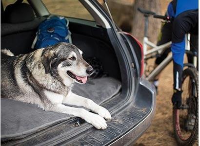 Ruffwear Mt Bachelor Dog Bed
