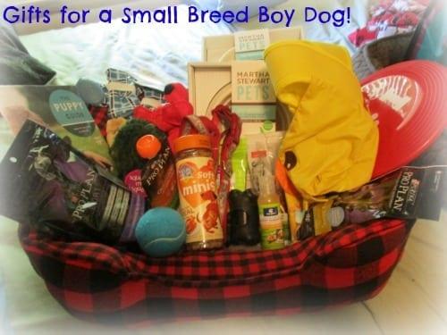 Petsmart Gift Basket Boy Dogs