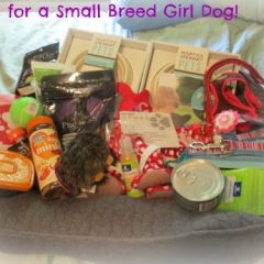 Petsmart Gift Basket for Girl Dog