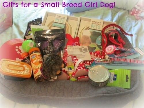 Petsmart Gift Basket for Girl Dog