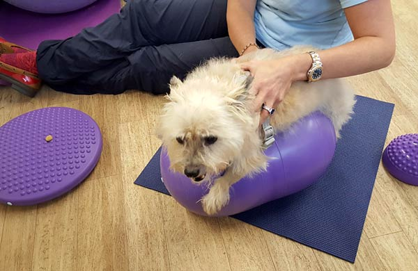 Canine Rehab for Tai