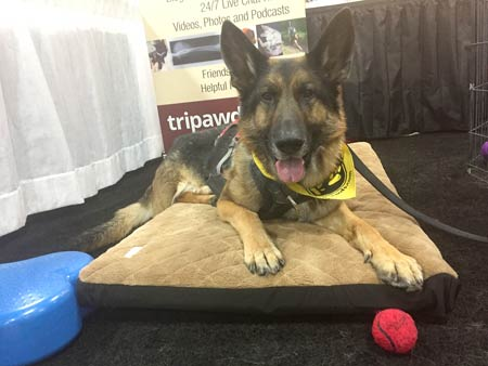 Wyatt in Tripawds Booth