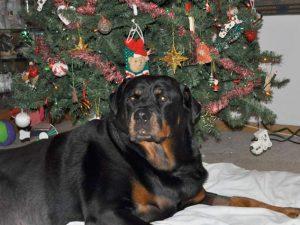 sassy christmas