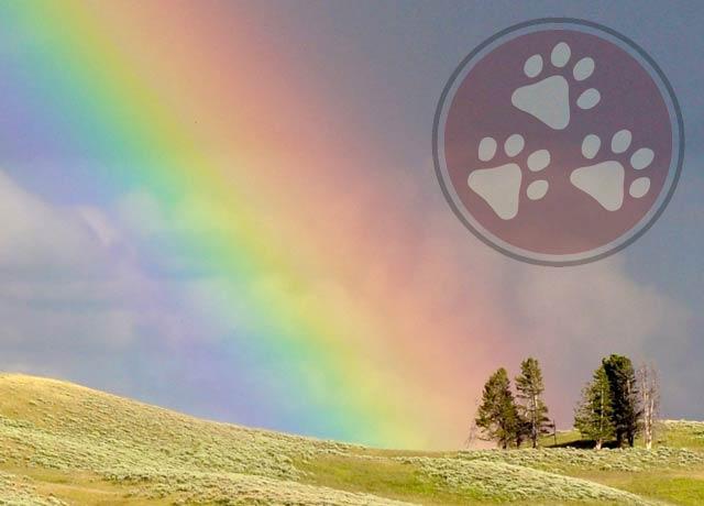 tri rainbow