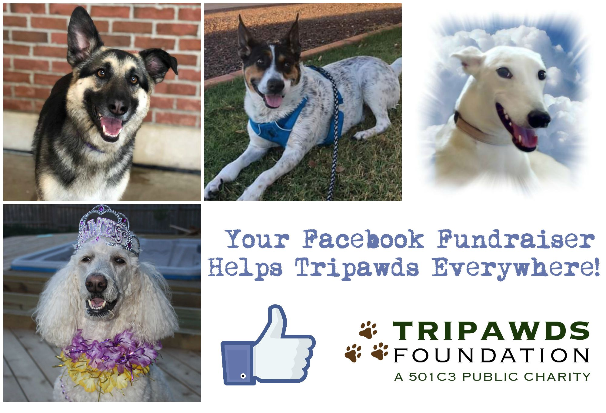 how to hold a Tripawds Facebook fundraiser