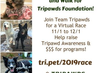 Tripawds 2019 virtual race
