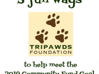 2019 Tripawds Community Fund