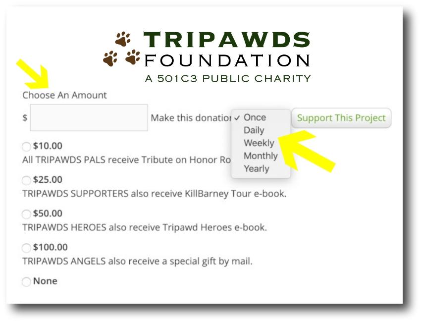 Help Tripawds All Year