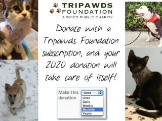 Tripawds Subscription Donation