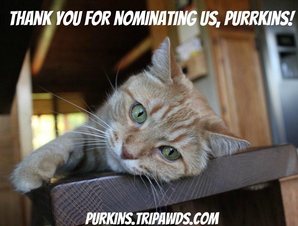 Purrkins Nominates Tripawds