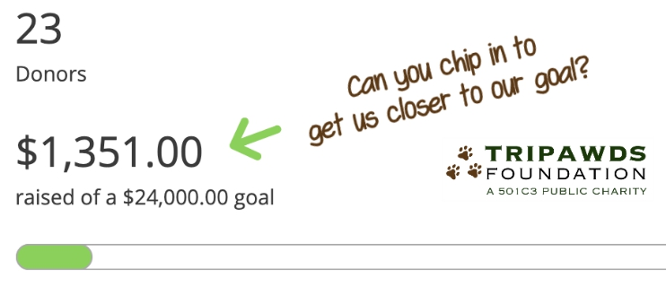 Tripawds Foundation 2020 Fundraising May
