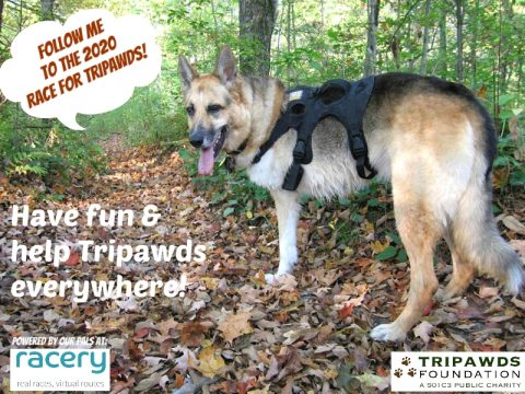 2020 Race for Tripawds