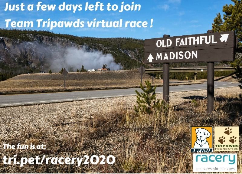 Tripawds Virtual Marathon 2020