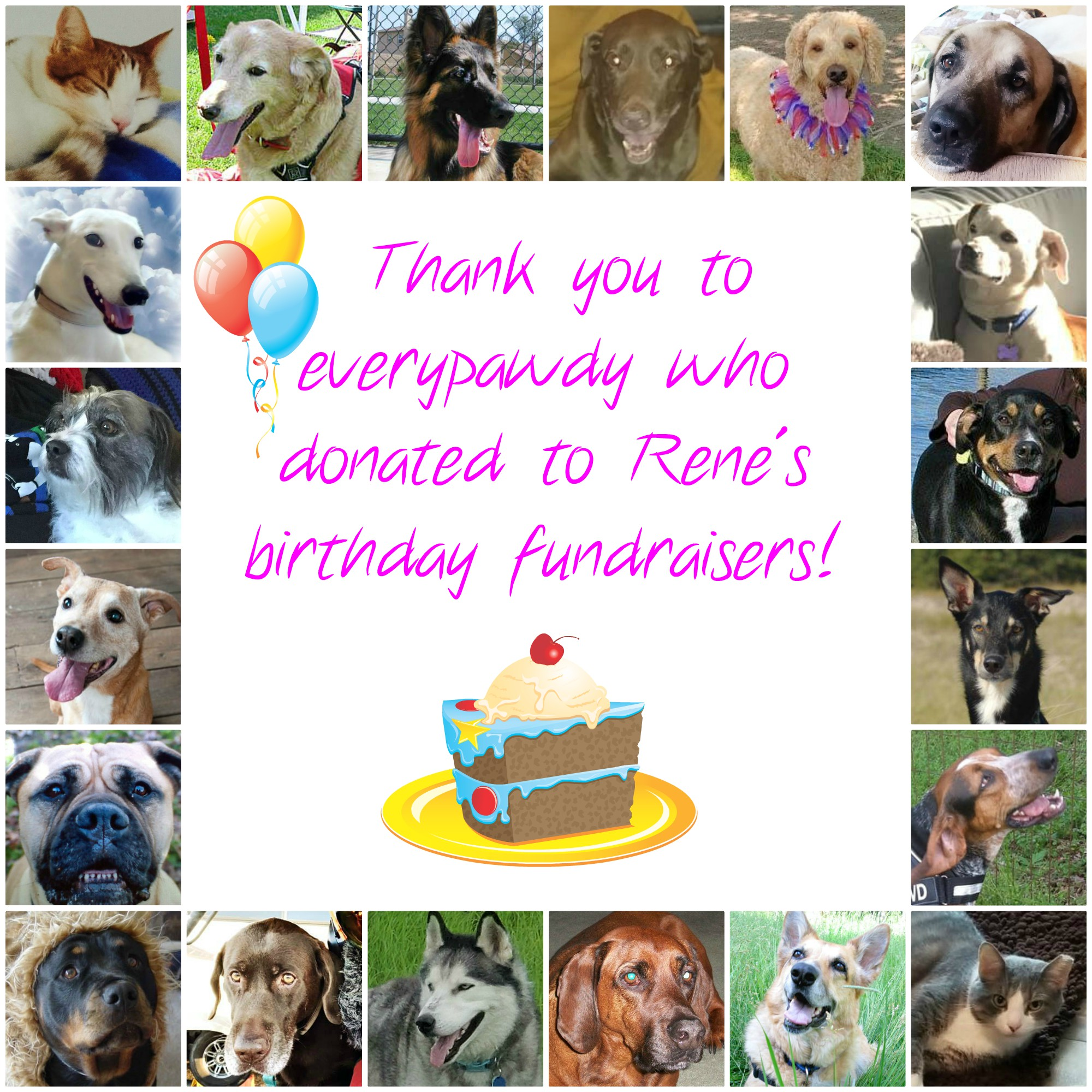 Tripawds Birthday Fundraisers