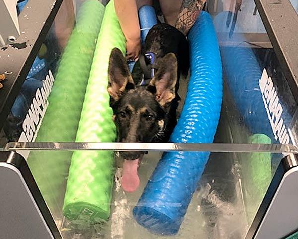 tripad puppy logan