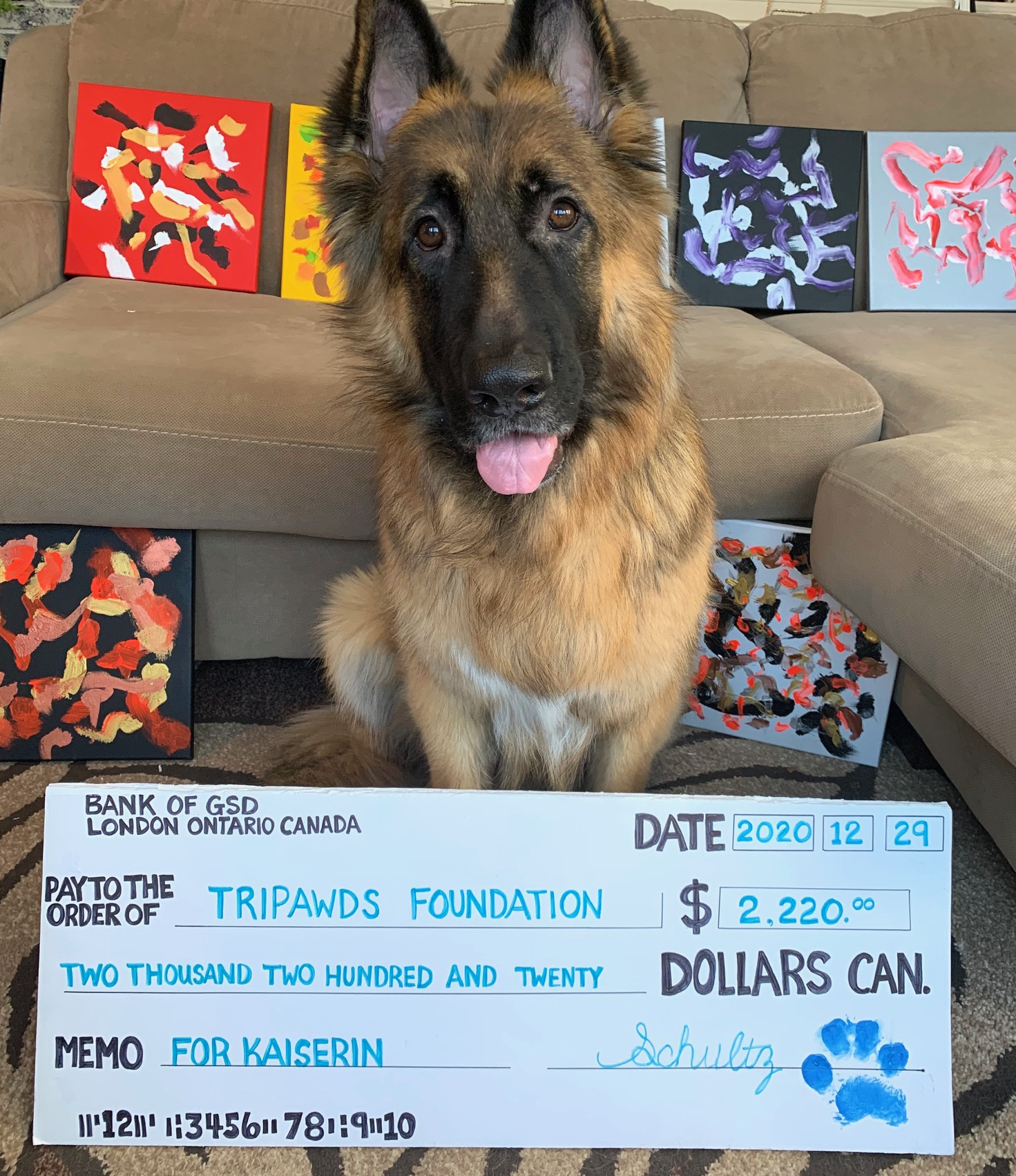 Schultz the painting dog for Tripawds