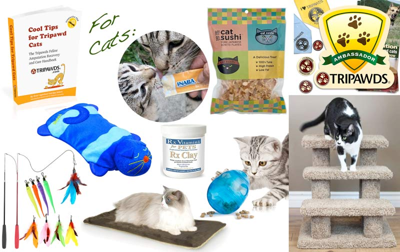 cancer cat gifts
