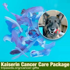 dog cancer gifts