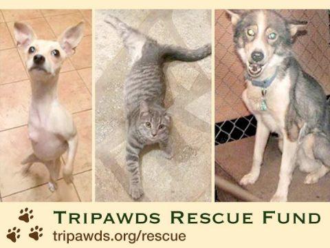 tripawds rescue fund