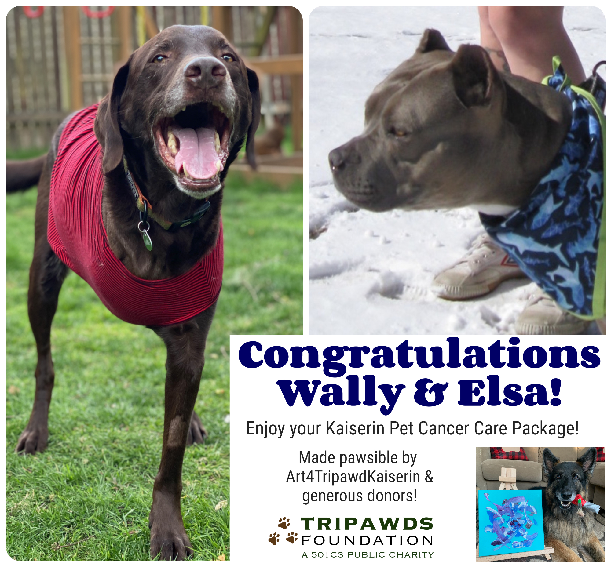 Kaiserin Pet Cancer Care Package Tripawds