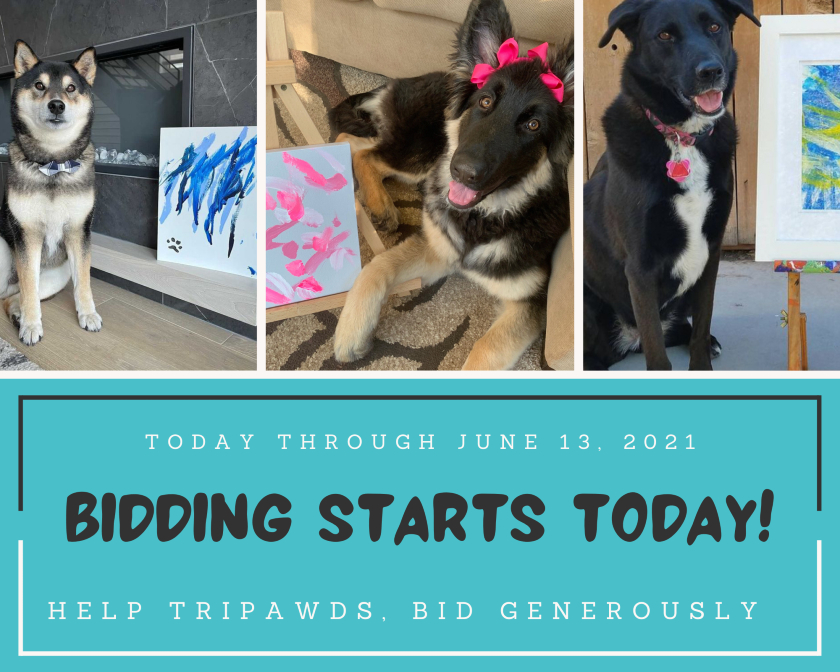 Painting Dogs Art Auction