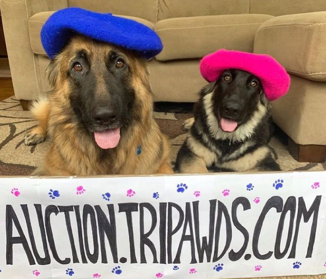 Tripawds Painting Dogs Art Auction begins