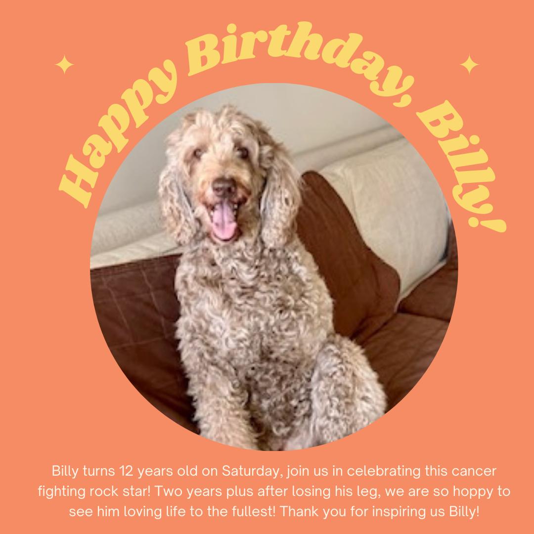 Tripawd birthday celebration
