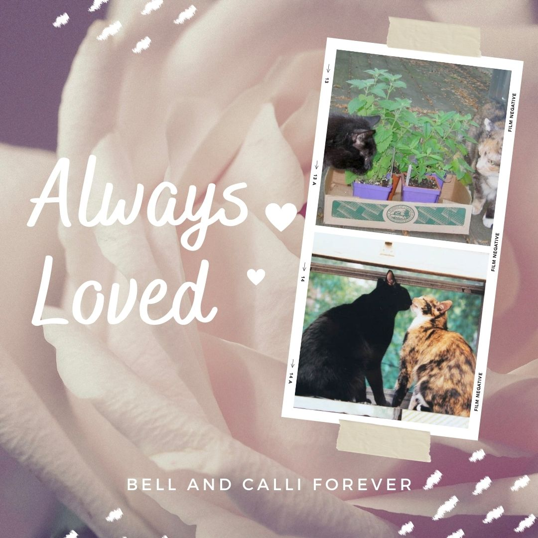 Helping Tripawds Tribute to Calli and Bell
