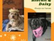 Daisy and Biscuit, Forever in My Heart