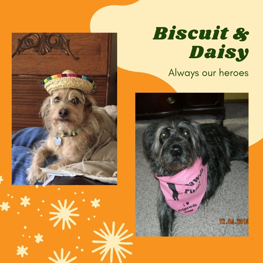 Two Tripawd dogs Biscuit and Daisy