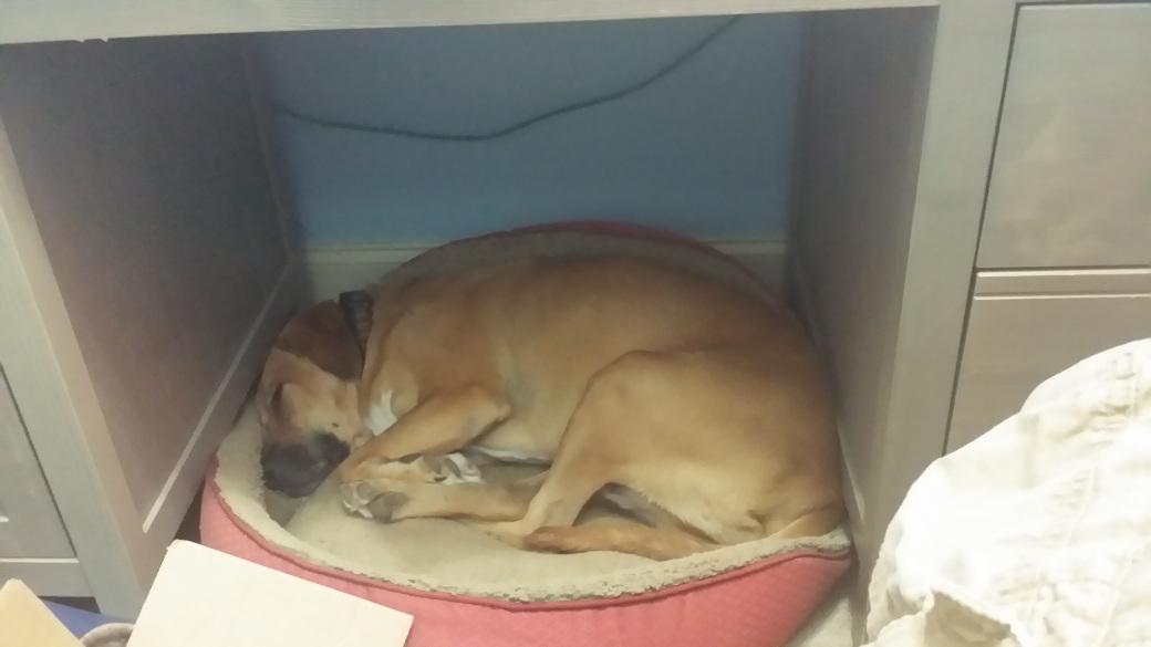 rescue dog Toby Tripawd
