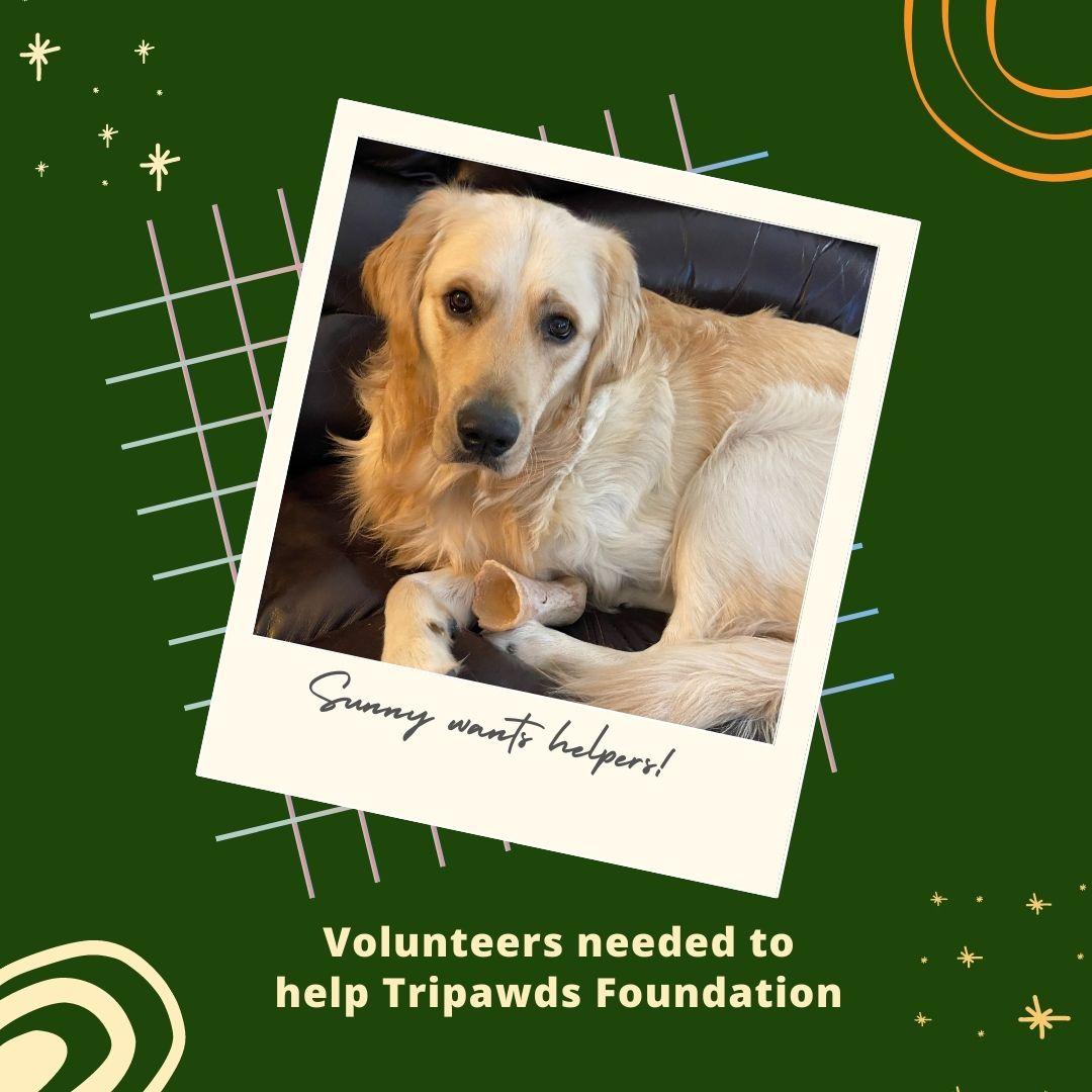 volunteers help Tripawds Foundation