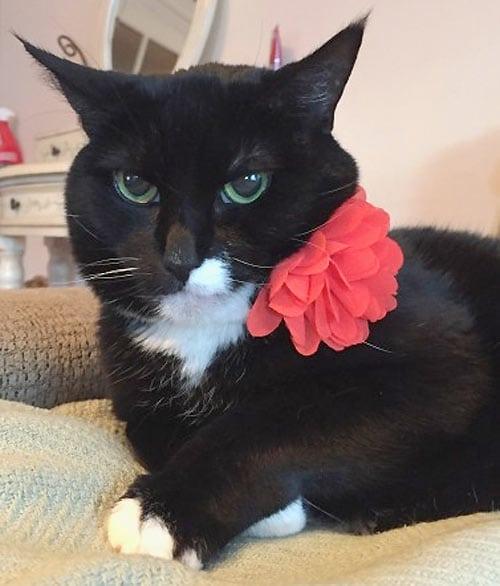 Tri-kitty Jill